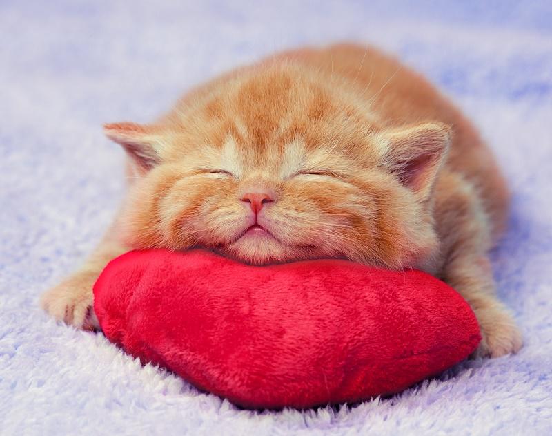 Almohadas inteligentes para el descanso